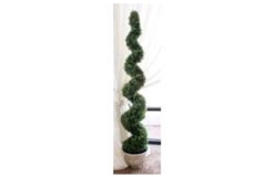 Rental store for 5  Boxwood Spiral Topiary Tree in Fresno CA